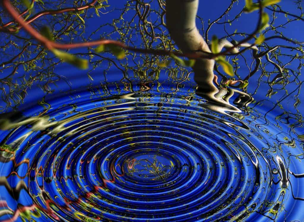 Circles on a water and tree reflexions